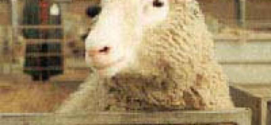 OGM: non c'è mercato per le carni clonate
