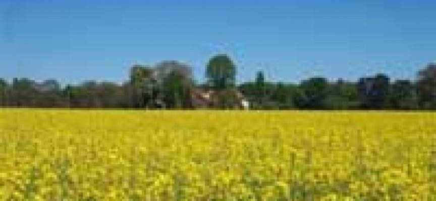 Nasce la prima Organizzazione di Produttori per l'agroenergia