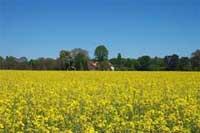 Emilia Romagna: La Provincia di Ravenna finanzia 26 imprese agricole per la costruzione di impianti per la produzione di energie rinnovabili