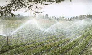 """L'irrigazione, non è uno """"spreco"""", e può essere gestita in termini più efficaci"""