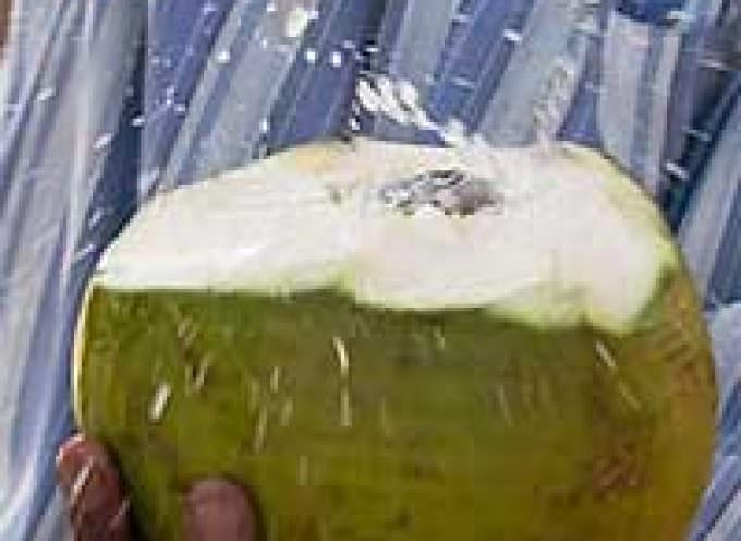 FAO looks to tap coconut water potential
