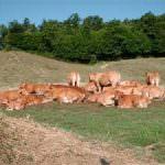 Poretti chiede maggiori controlli sulle carni importate in Italia