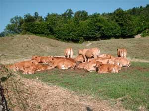 Carne bovina e suina biologica direttamente nelle nostre case