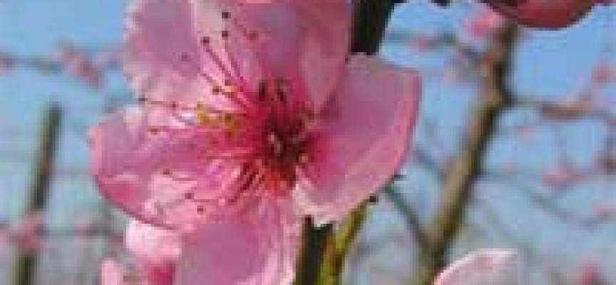 Fruttinfiore a Lagnasco giunge alla Quinta Edizione