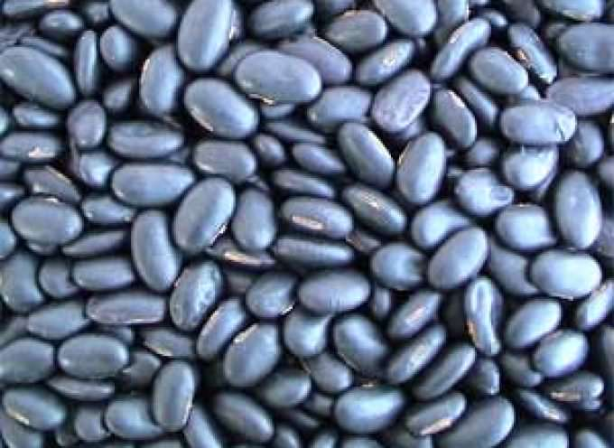 A diet rich in black soya beans could help control weight