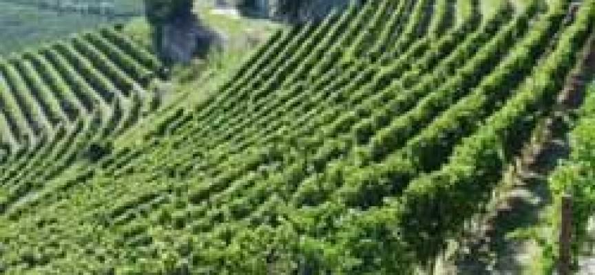 """Il vino italiano vola, l'enoturismo sfida """"globale"""""""