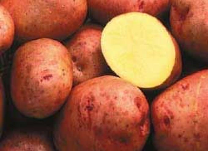 "Arriva la ""Golden Potato"""