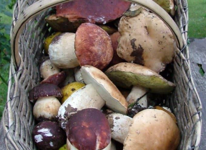 Funghi, l'opuscolo del Ministero per difendersi dagli avvelenamenti