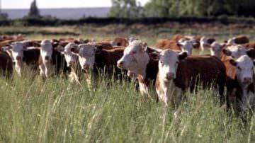 La FAO avvisa: entro il 2050, +73% nel consumo di carne