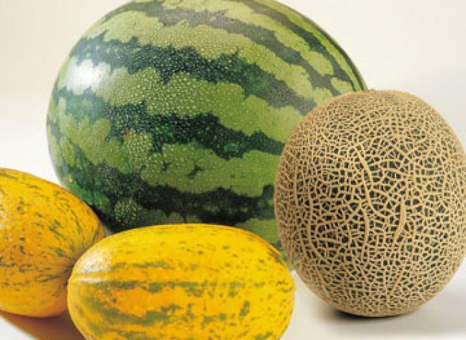 Un proyecto hortofrutícola con más de 18.000 hectáreas comienza con producción de melones y sandías