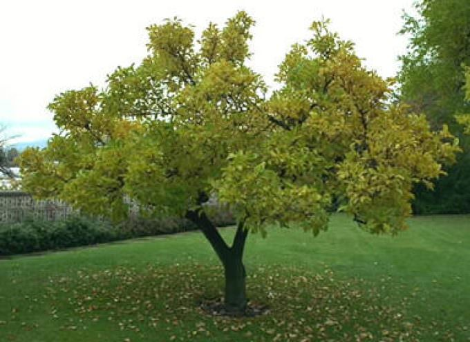 Un árbol absorbe de media los gases tóxicos que emiten 100 coches en un día