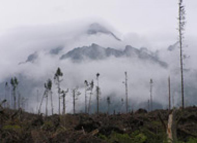 Climate change and forestry in Europe