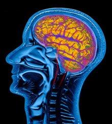 L'olio di pesce protegge dalle malattie neurodegenerative