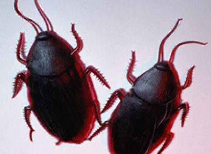 La fuga dello scarafaggio? Non è casuale