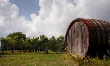Agricoltura: obiettivo sud…