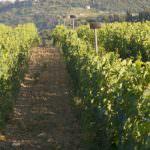 La musicoterapia fa bene alla vigna e al vino