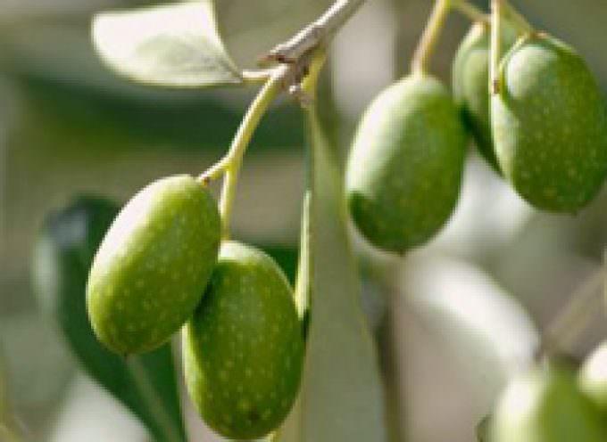 Redoro l'olio extravergine di oliva fatto ad arte dal 1895