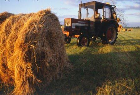 Abruzzo, aree del demanio per i giovani agricoltori