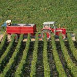 Agricoltura, le proposte della Cia per la Finanziaria 2009