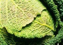Verdure di stagione: il cavolo