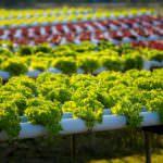Confagricoltura: investire nell'innovazione le risorse che il G8 intende destinare all'agricoltura