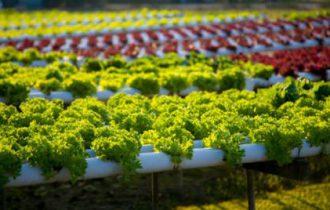 Agricoltori protagonisti, così la Cia disegna il futuro dell'agricoltura italiana