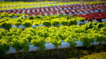 Elezioni: l'agricoltura deve essere una priorità