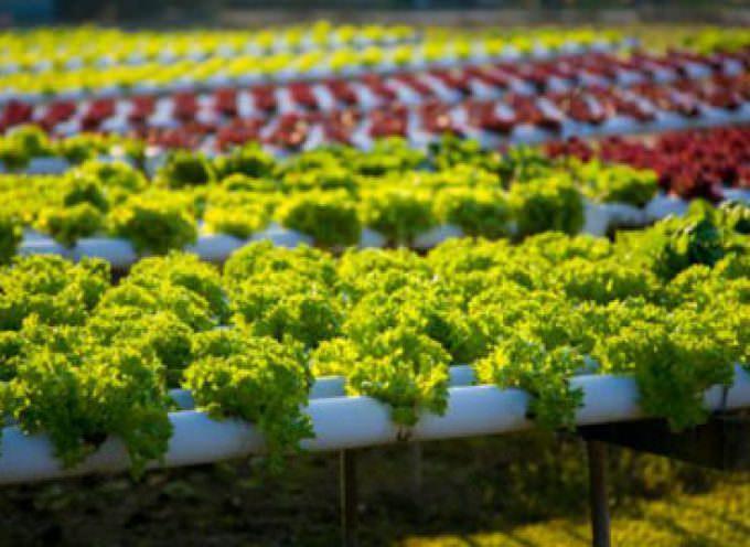 Agricoltura, in crescita la produzione biologica delle cooperative