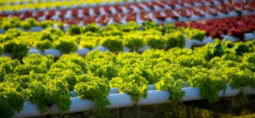 Inflazione: Coldiretti, boom acquisti diretti blocca i prezzi