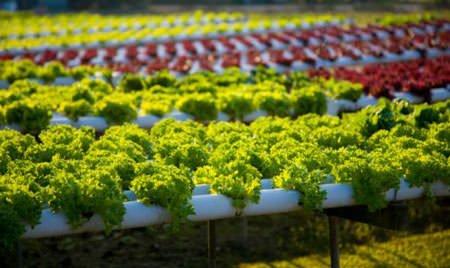 Les prix agricoles sont repartis à la baisse en février