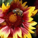 Addio agli insetti, agricoltura a rischio
