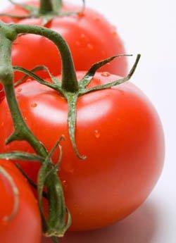 Scoperto un nuovo gene cheregola le fasi iniziali dello sviluppo del pomodoro senza impollinazione