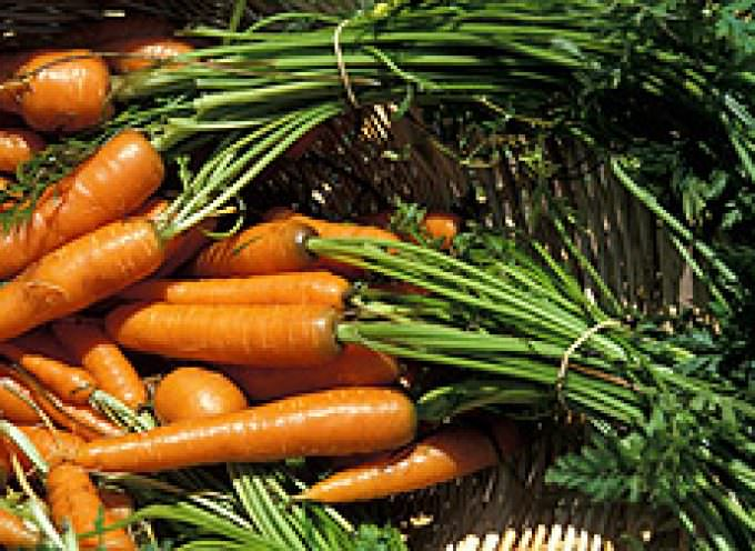 Increasing Calcium in Carrots and Other Vegetables