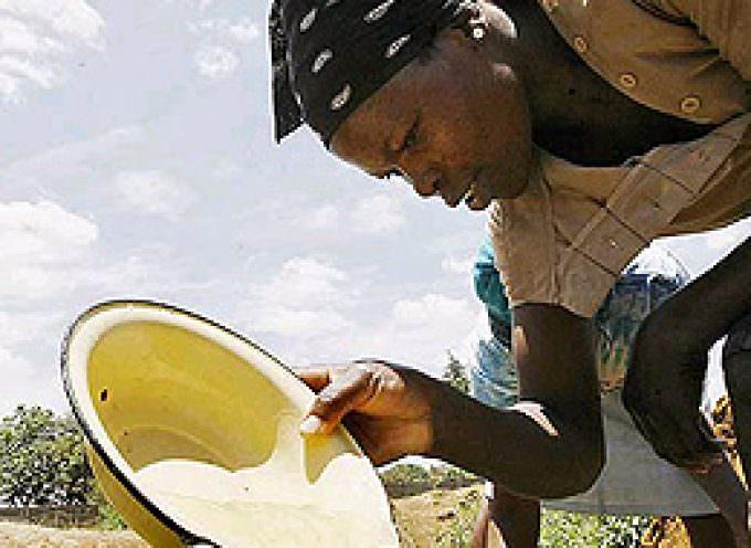 Un brote de ántrax se suma a la epidemia de cólera y agrava la crisis sanitaria en Zimbaue