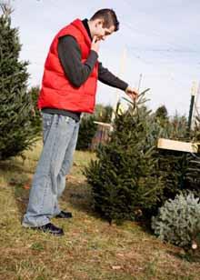 Natale: Coldiretti, 6,5 mln alberi veri superano quelli finti