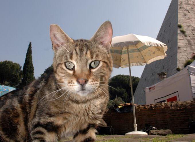 """""""In Italia mangiati 7000 gatti l'anno """". L'Aidaa lancia l'allarme"""