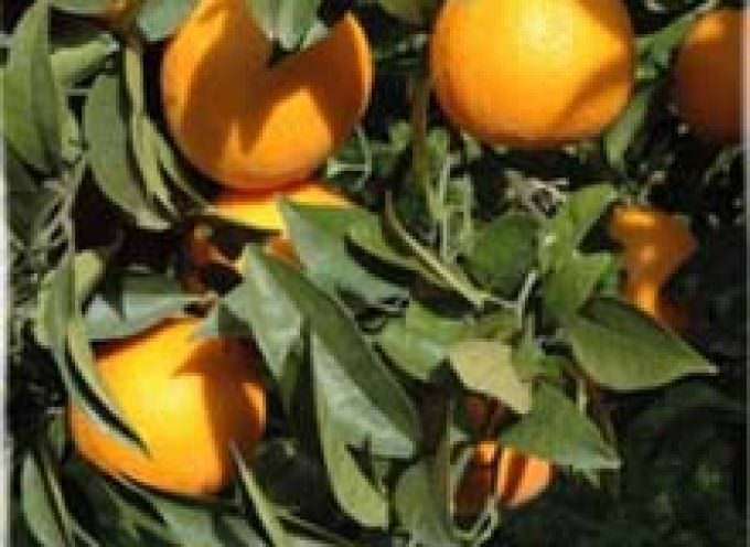 Usare le arance per fabbricare i pannelli fotovoltaici