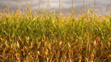 Energia, al via gli incentivi per la produzione di energia elettrica mediante biomassa agricola