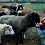"""8 marzo, Donne in campo: l'impresa agricola """"in rosa"""" regge meglio alla crisi economica"""