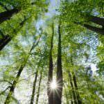 La Fao sostiene che la crisi economica può rivelarsi un'opportunità per la gestione eco-sostenibile delle Foreste