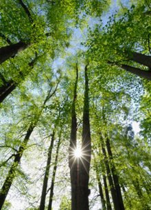 € 14 million Finland/FAO forestry programme