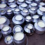 Crisi del latte: A Lussemburgo, migliaia i produttori che protestano