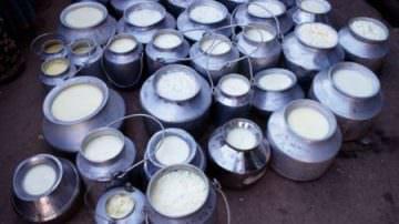 Crisi del latte: Assolatte ribadisce agli allevatori la sua proposta