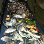 Pesce con il pedigree per mangiare meglio
