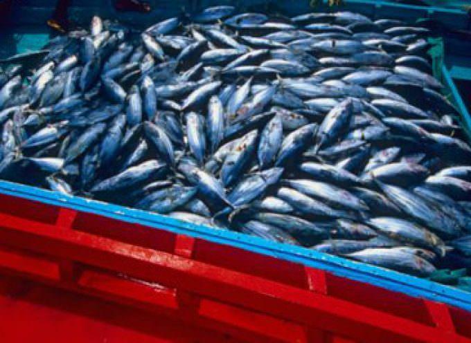 """Le """"reti fantasma"""" danneggiano l'ecosistema marino"""