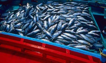 Pesca, Borg: al via i processi di cooperazione nel Mediterraneo per rilanciare il settore