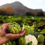 Il 10% dei lavoratori agricoli sono extracomunitari
