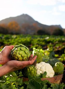 Raccolti più abbondanti: una proteina sfida la fame nel mondo