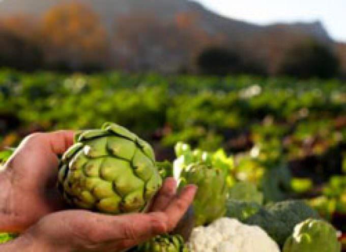 Crisi: Coldiretti, 1 impresa agricola su 2 in difficolta' guarda a moratoria