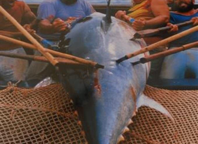 Repubblica Ceca: Pronto lo stop alla pesca del tonno rosso